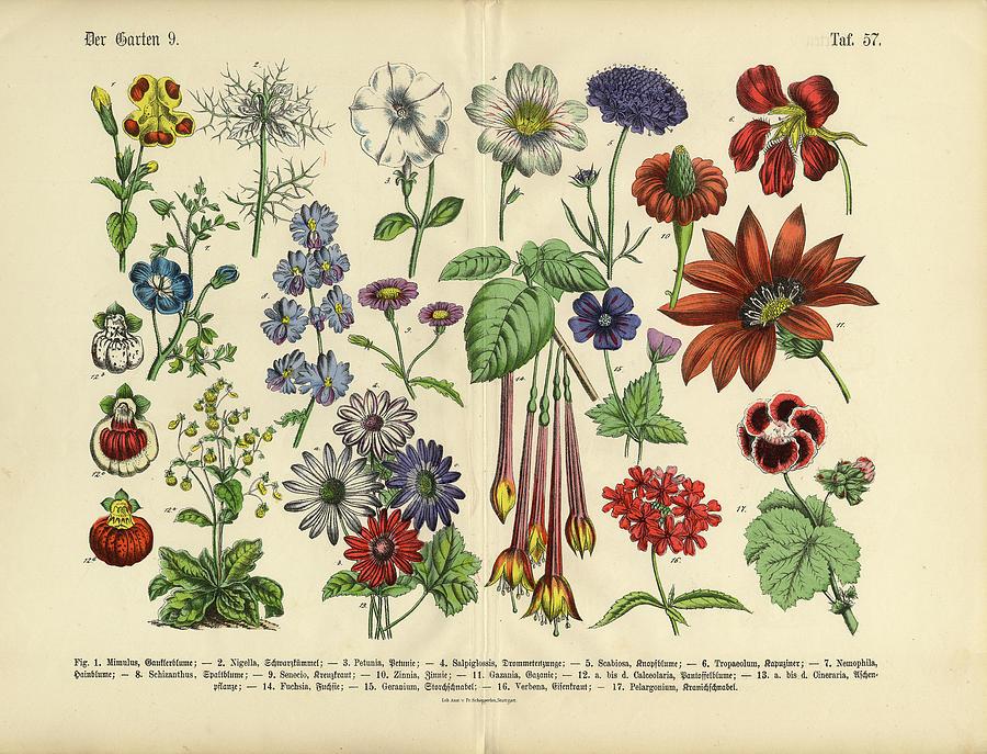 Flowers Of The Garden, Victorian Digital Art by Bauhaus1000