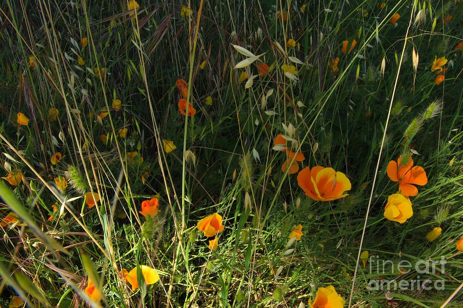 Orange Photograph - Flowers Of Wild  by Tim Rice