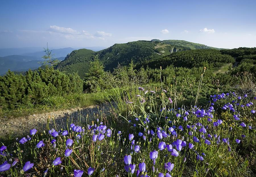 Beauty Photograph - Flowers On Summer Mountain  by Ioan Panaite
