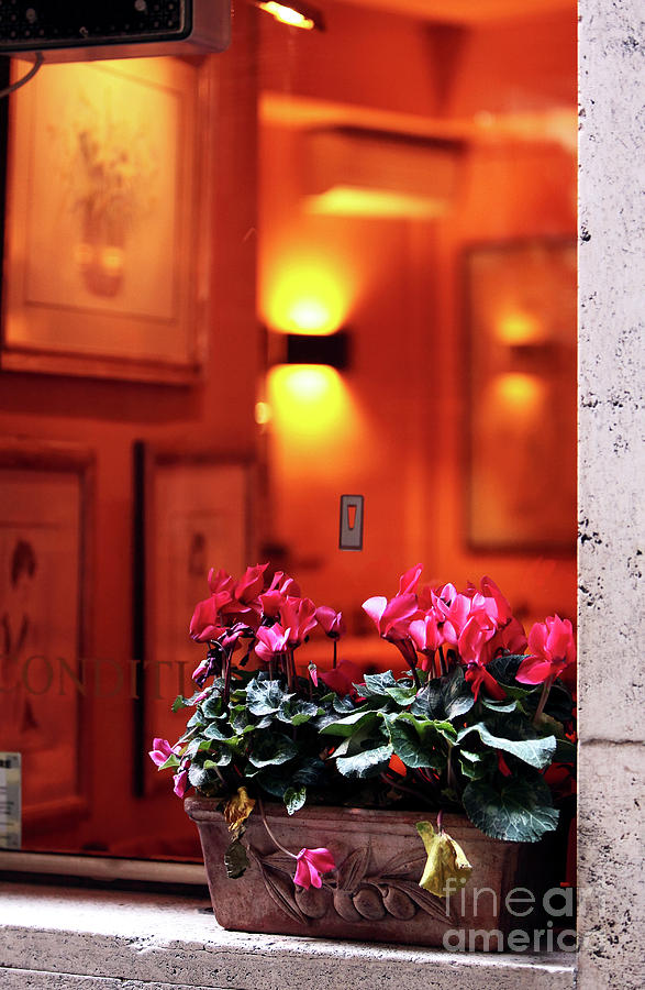Pictures Photograph - Flowers On The Ledge by John Rizzuto