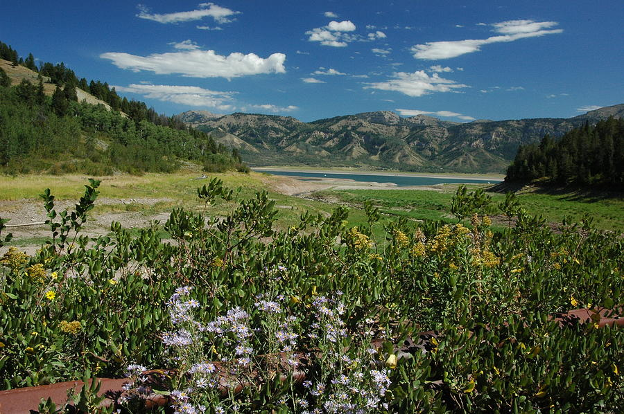 Wilderness Photograph - Flowers On The Palisades Resevoir Idaho by Larry Moloney