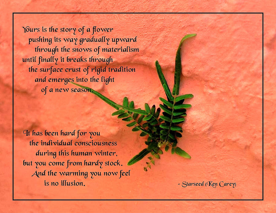 Quotation Photograph - Flowers On The Wall by Mike Flynn