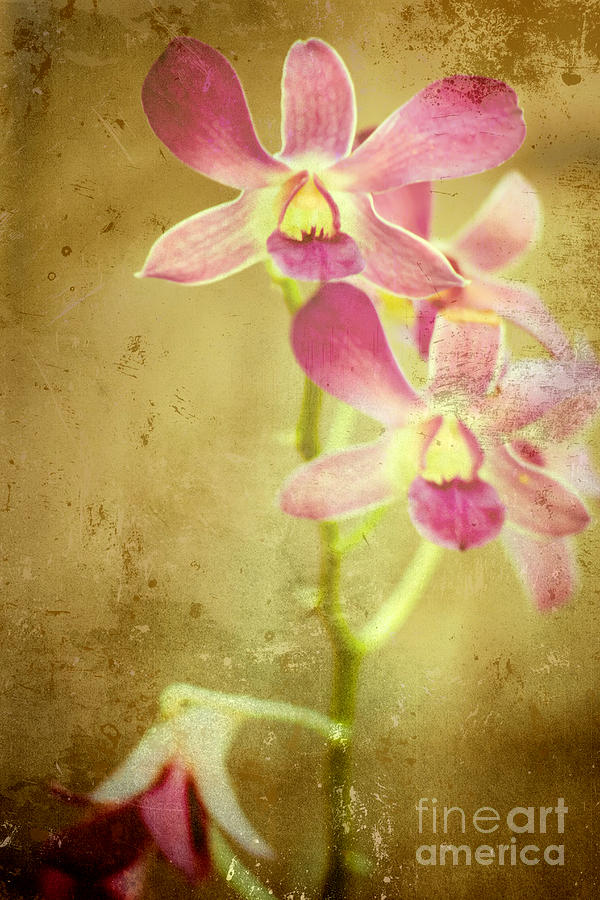 Flower Photograph - Flowers by Sophie Vigneault