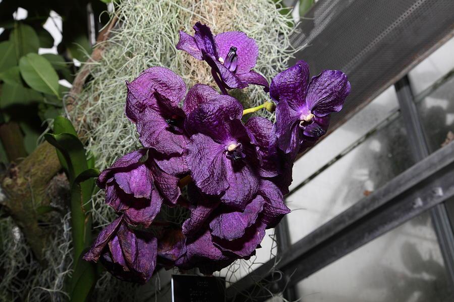 Washington Photograph - Flowers - Us Botanic Garden - 011313 by DC Photographer