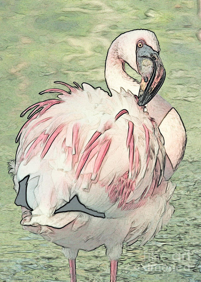Flamingo Photograph - Fluffing Flamingo  by Carol Groenen