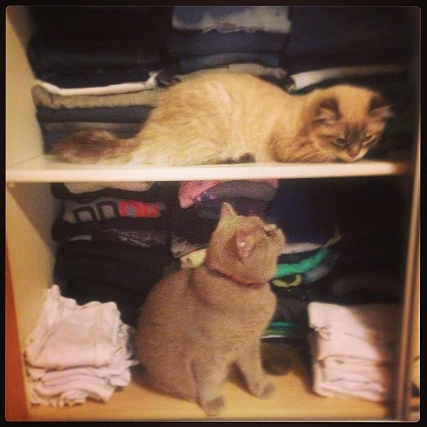 Instagram Photograph - Fluffy & Dusty In The Closet #closet by May Pinky  ✨