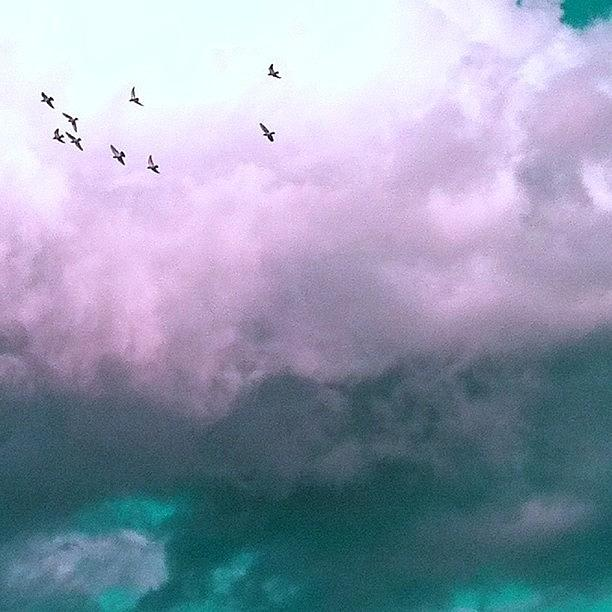 Surreal Photograph - Fluffy Flight by Courtney Haile
