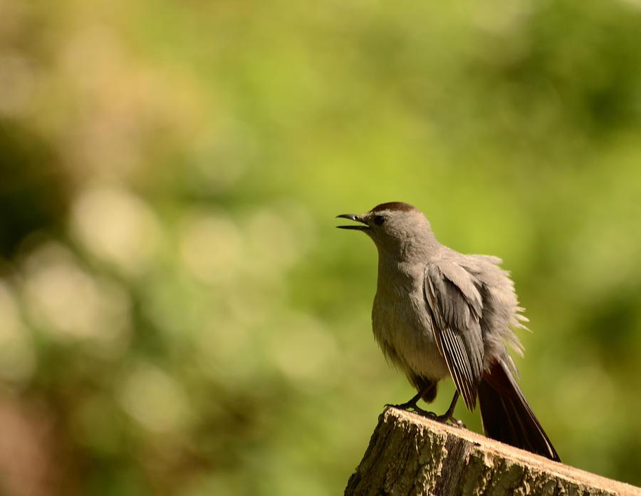 Bird Photograph - Fluffy by Lori Tambakis