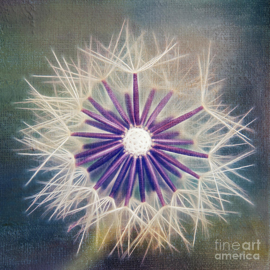 Dandelion Photograph - Fluffy Sun - 9bt2a by Variance Collections