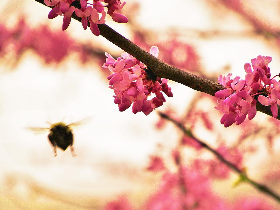 Bumble Bee Photograph - Fly Away by Christian Rooney