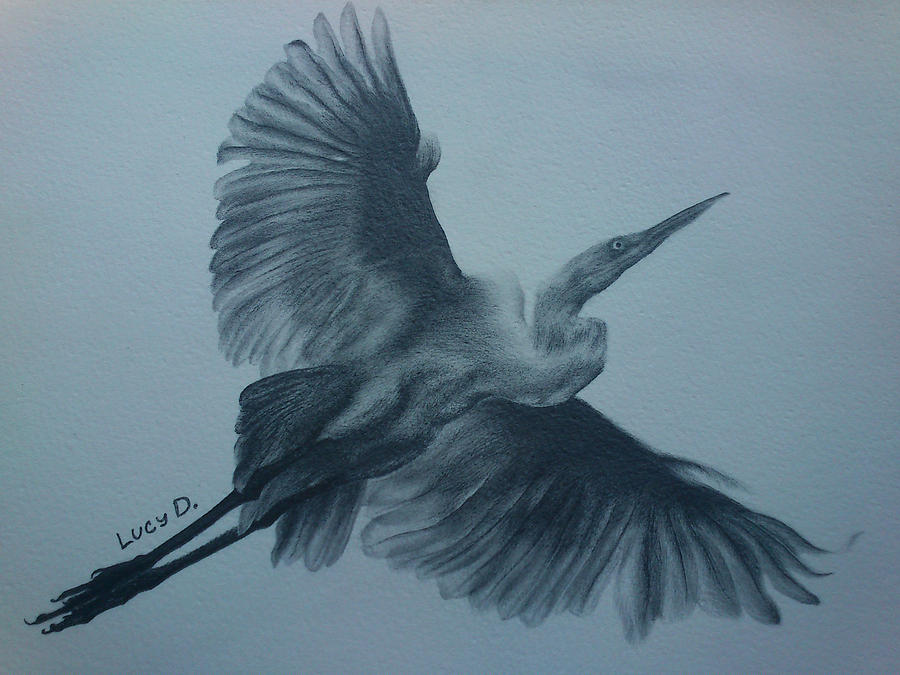 Bird Drawing - Fly Away by Lucy D