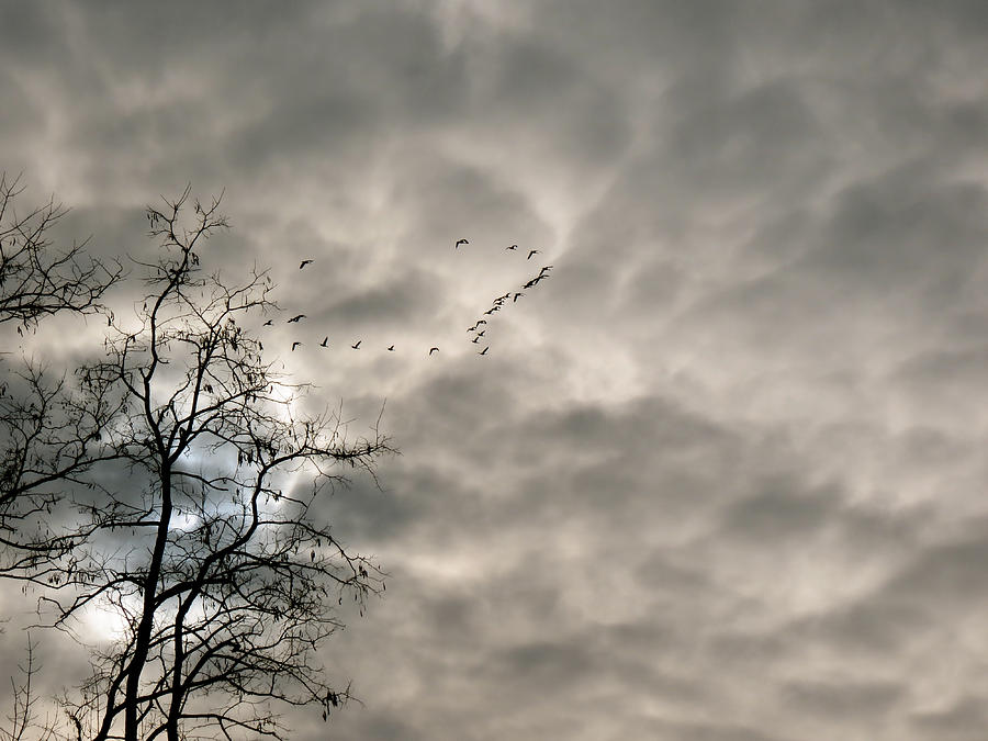 Cloudy Photograph - Fly By by Azthet Photography