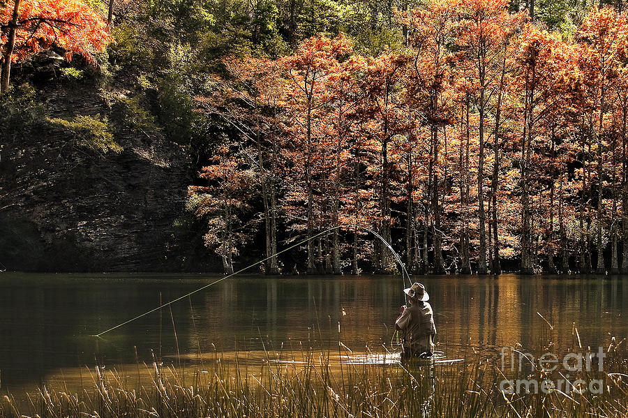 Fly Fishing Photograph - Fly Fishing  by Tamyra Ayles