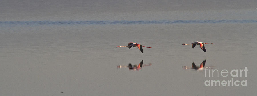 Heiko Photograph - Fly Fly Away My Pretty Flamingo by Heiko Koehrer-Wagner