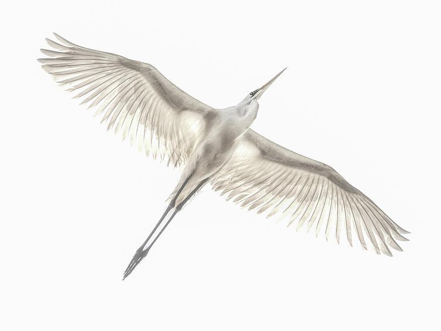 Avian Photograph - Fly by Keren Or
