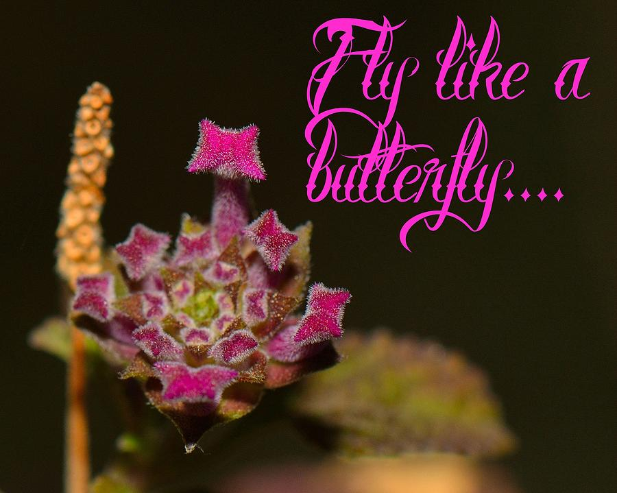 Cards Photograph - Fly Like A Butterfly by Old Pueblo Photography