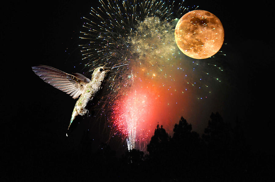 Moon Photograph - Fly Me To The Moon by Lynn Bauer