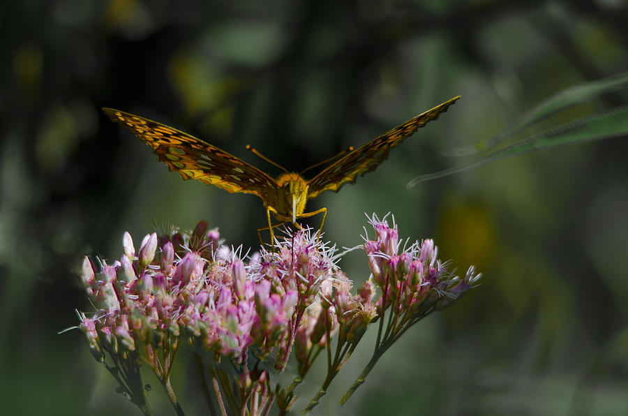 Fly On A Milkweed Plant Photograph