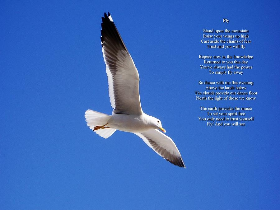 Inspirational Photograph - Fly by Robert Longley
