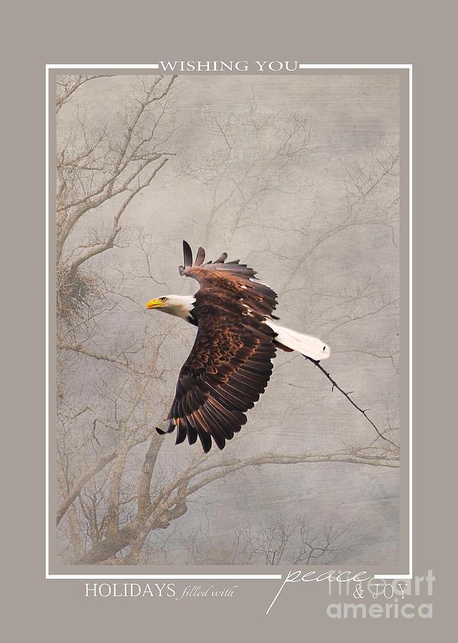 Flying Bald Eagle Christmas Cards Photograph by Jai Johnson