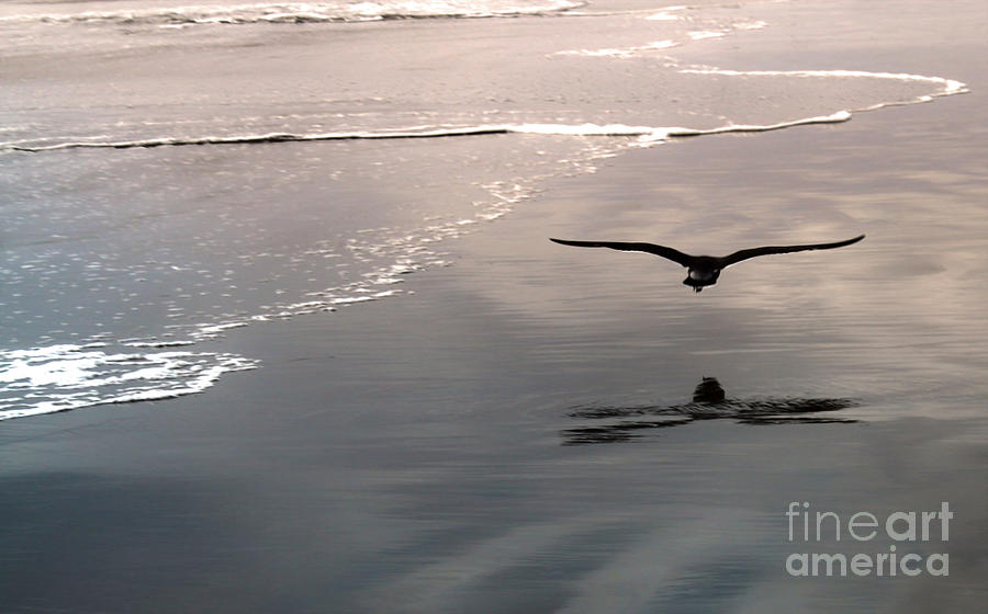 Seagull Painting - Flying Close To The Ground by Gregory Dyer