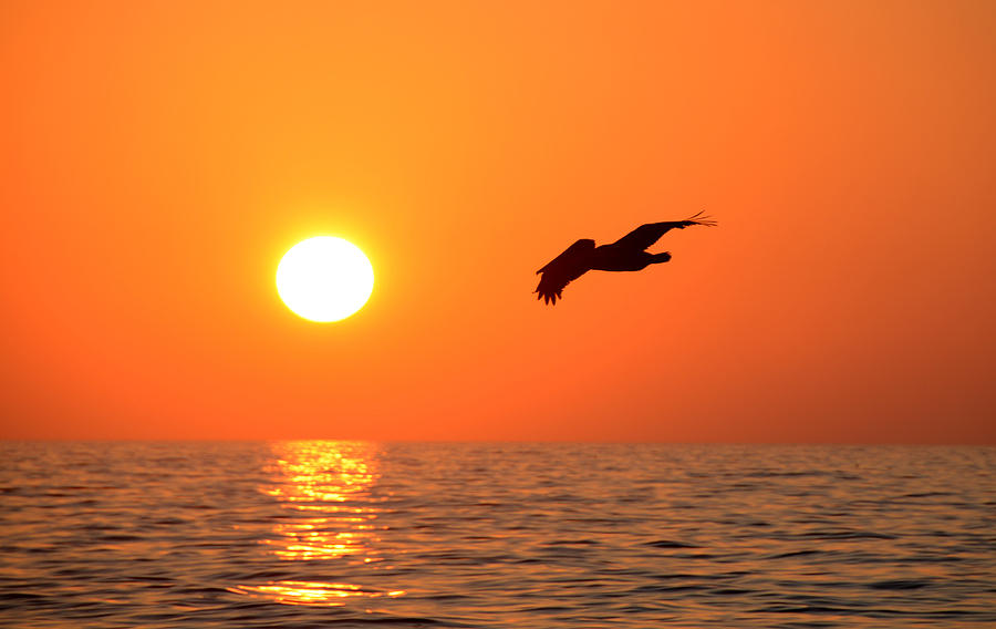 Wildlife Photograph - Flying Into The Sun by David Lee Thompson