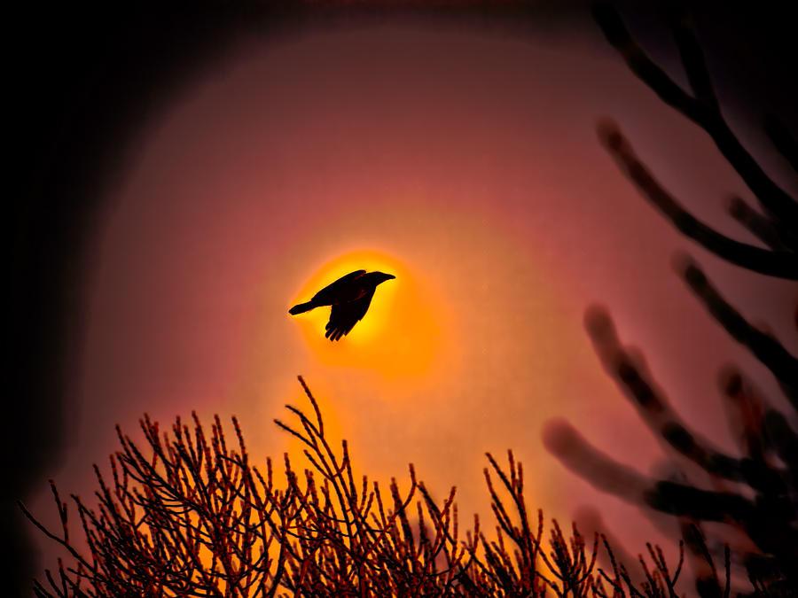 Bird Photograph - Flying - Leif Sohlman by Leif Sohlman