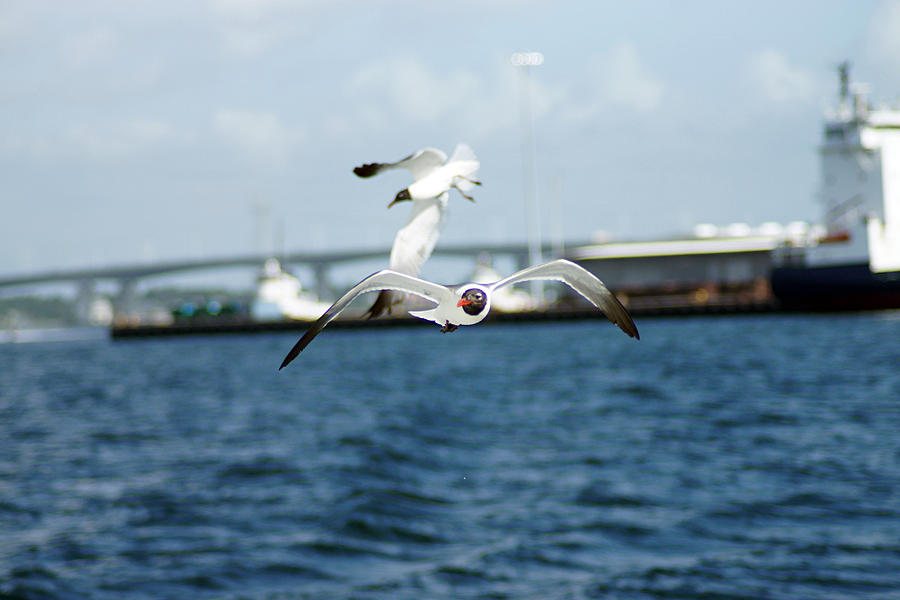 Florida Photograph - Flying Low by Thomas Fouch