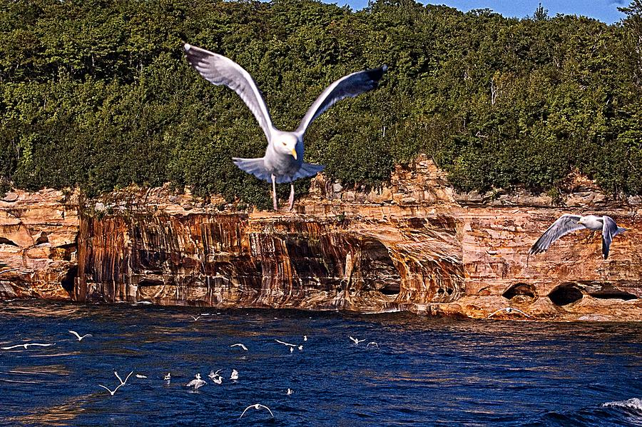 Pictured Rocks Photograph - Flying Over The Rocks by Cheryl Cencich