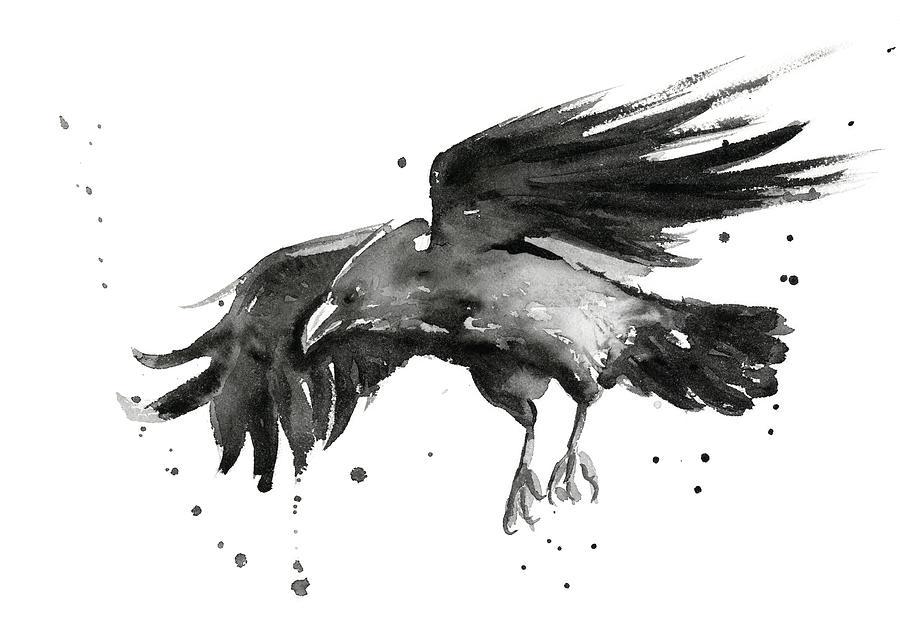 Flying Raven Watercolor Painting By Olga Shvartsur