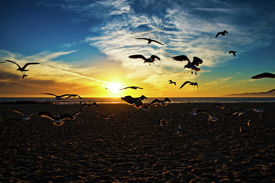 Flying Seagulls Photograph by Extreme-photographer