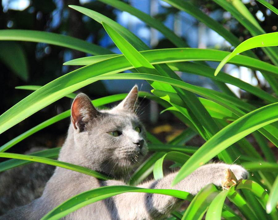 Cat Photograph - Focus by Debbie Cundy