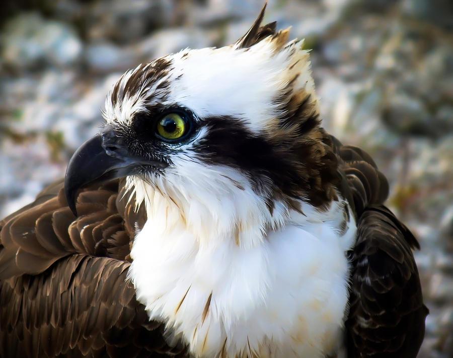 Birds Photograph - Focused by Karen Wiles