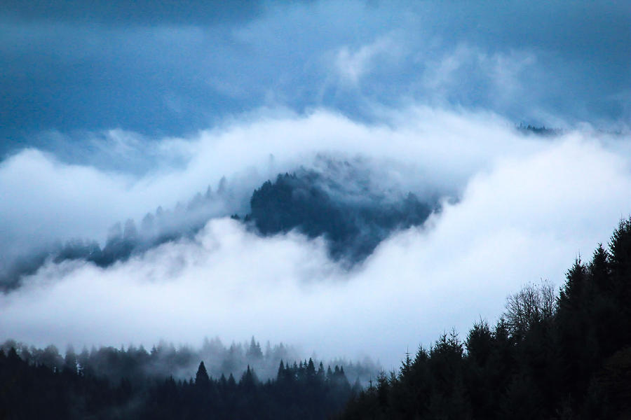 Oregon Photograph - Fog After Storm by Katie Wing Vigil