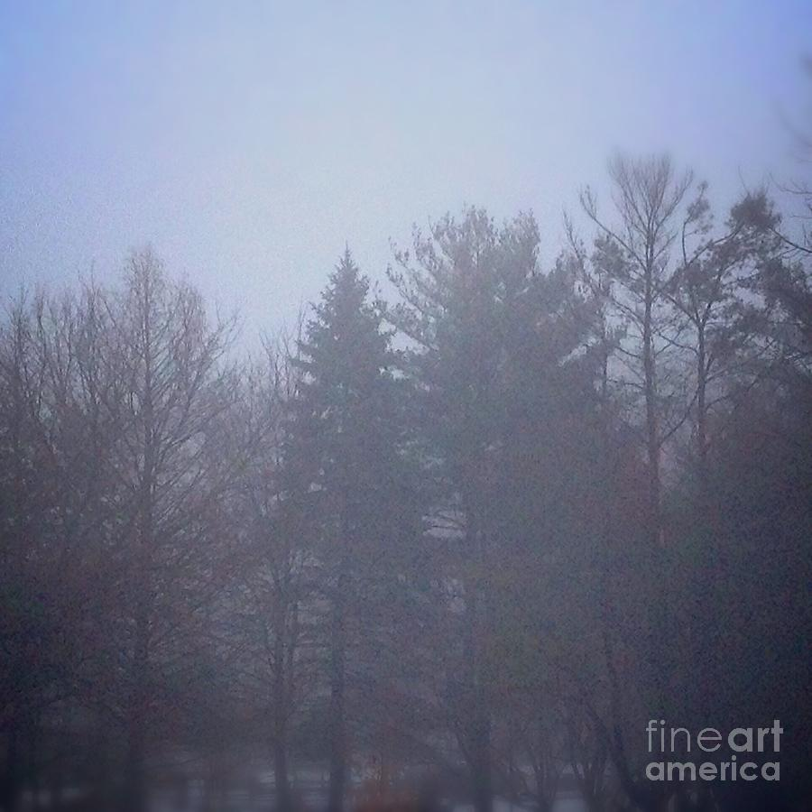 Fog Photograph - Fog and Mist by Frank J Casella