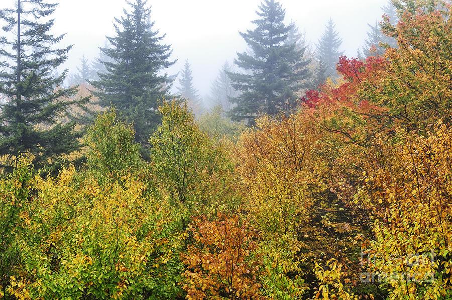 Fall Photograph - Fog Fall Day by Thomas R Fletcher