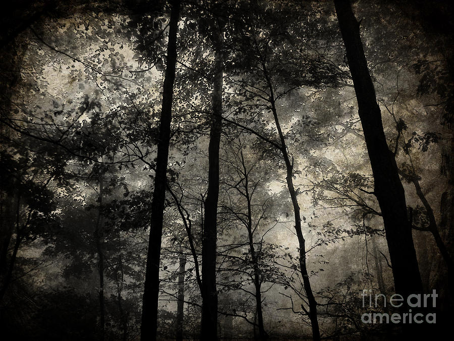 Landscape Photograph - Fog In The Forest by Lorraine Heath