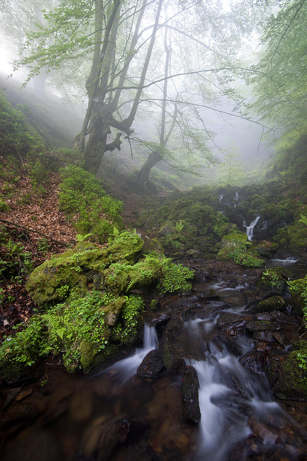 Landscape Photograph - Fog In The Forest by Marilar Irastorza