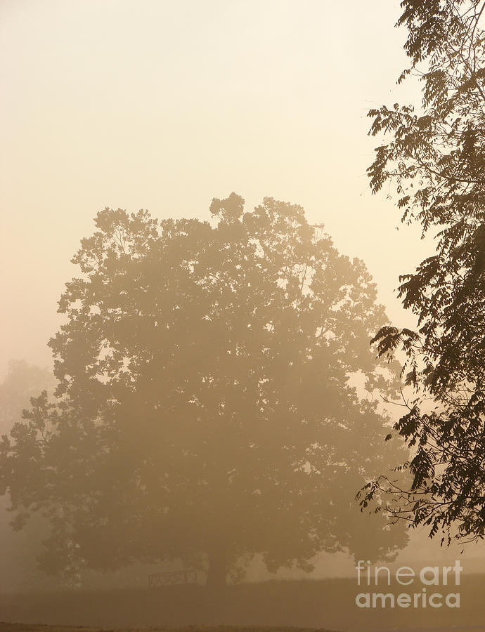 Tree Photograph - Fog Over Countryside by Olivier Le Queinec