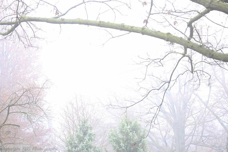 Fog Photograph - Fog by Stacie  Goodloe