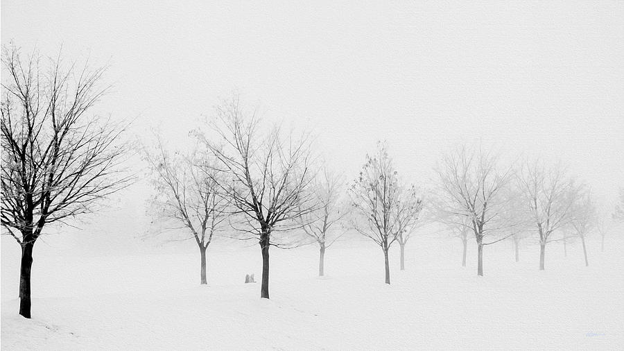 Fogged by Kathy Bassett