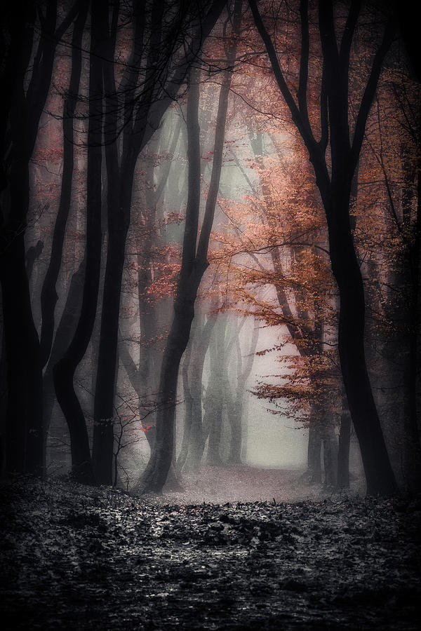 Forest Photograph - Foggy Autumn by Joost Lagerweij