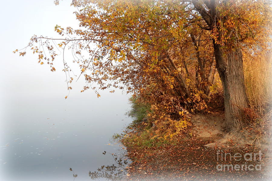 Autumn Photograph - Foggy Autumn Riverbank by Carol Groenen