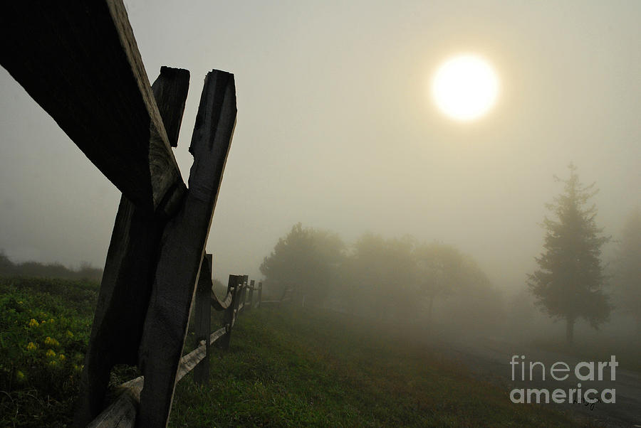 Fog Photograph - Foggy Country Road by Lois Bryan