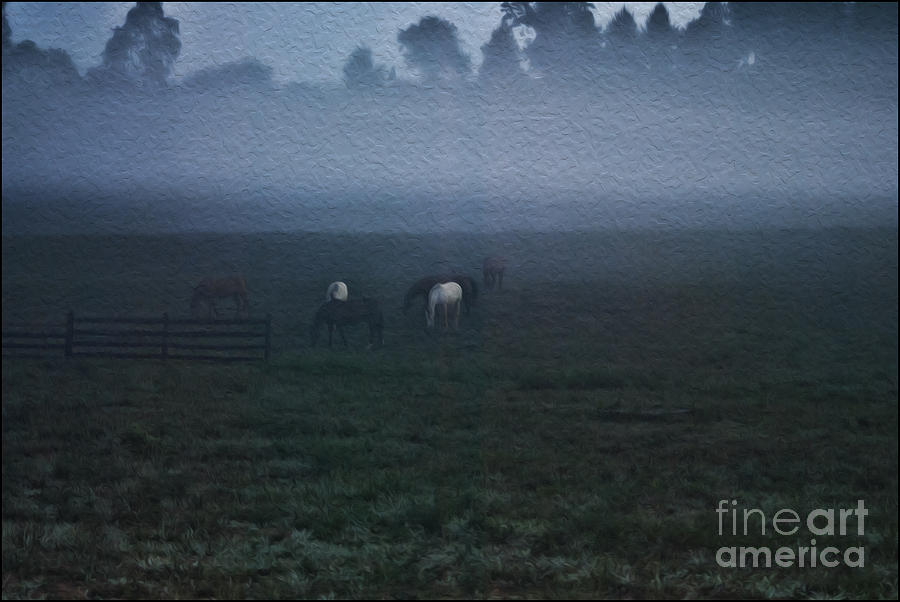 Animals Photograph - Foggy Dew by Joe McCormack Jr