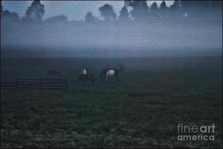 Animals Photograph - Foggy Dew by Joe McCormack Jr