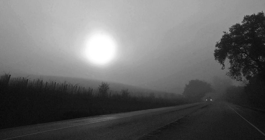 Fog Photograph - Foggy Drive By A Vineyard by Richard Hinds