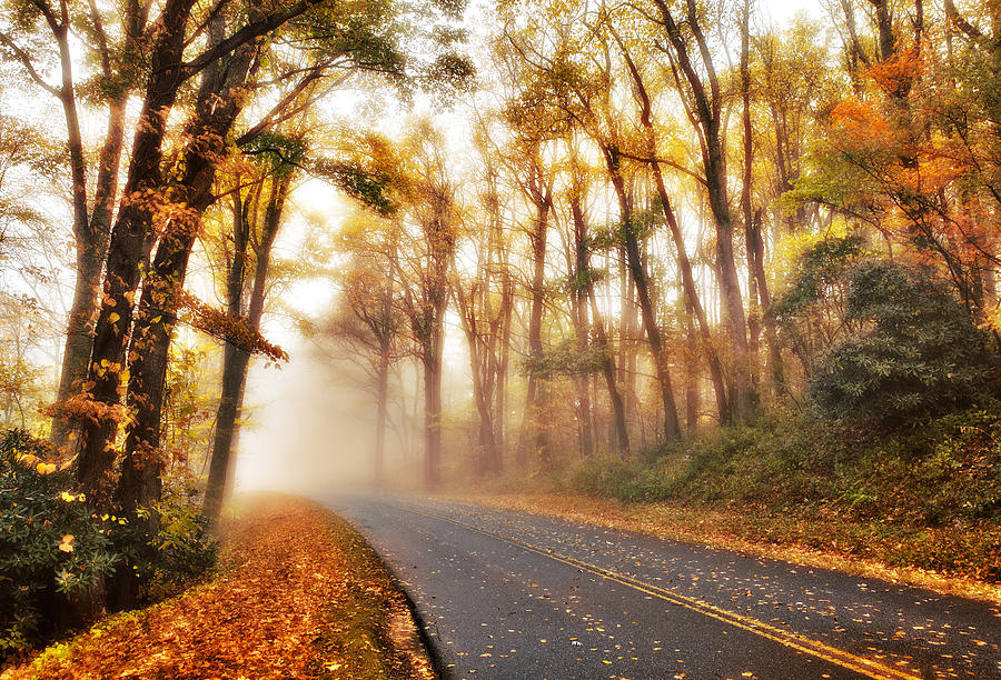 Blue Ridge Parkway Photograph - Foggy Fall Wonderland - Blue Ridge Parkway I by Dan Carmichael