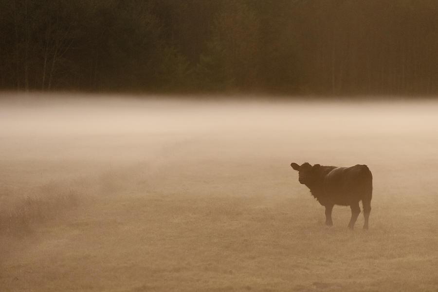Foggy Field Photograph