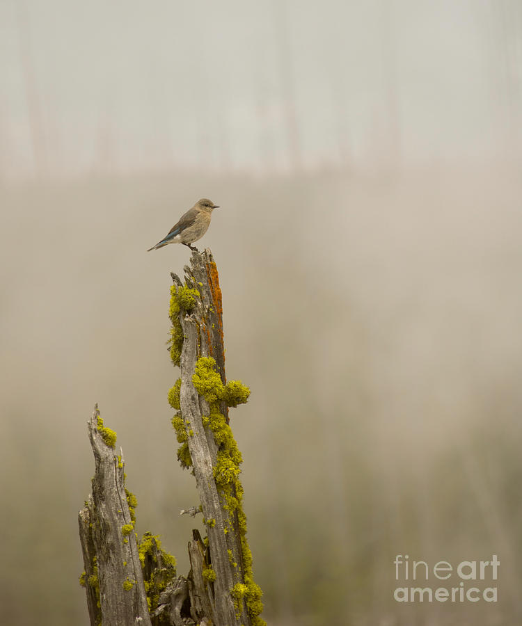 Wyoming Photograph - Foggy Friend by Birches Photography